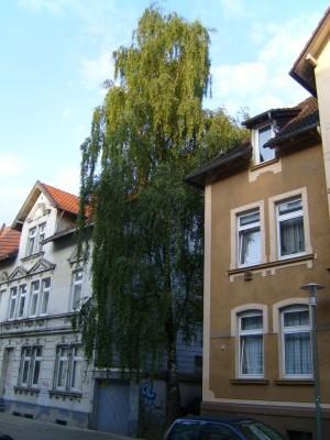 Birke Meller Straße Bielefeld