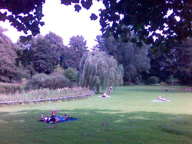 Nordpark Trauerweide