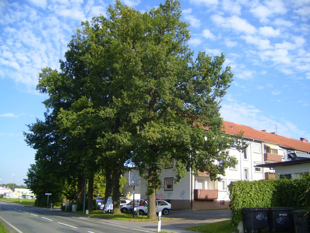Eichen Babenhausener Str 39