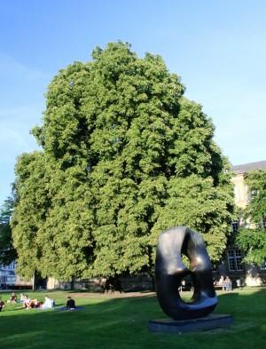 Rosskastanie Nähe Kunsthalle