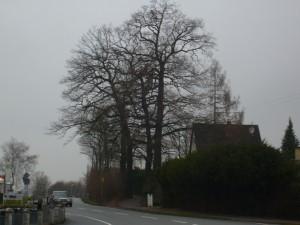 Eichen Vogteistr Winter