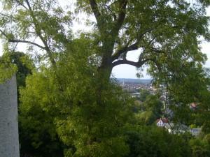 Sparrenburg-Esche