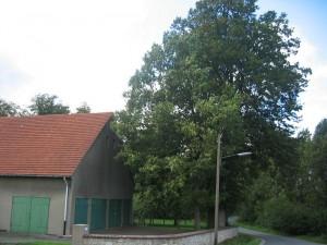 Hoefeweg-Eichen1
