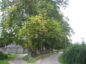 Hoefeweg-Eichen3 - Kopie