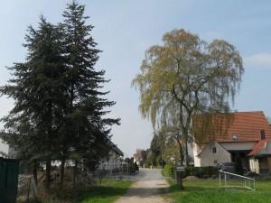 Milse-Birke