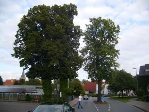 An-der-Reegt-Linden+Eiche