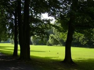 Bultkamppark-Buchen+Eiche
