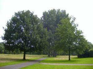 Bultkamppark-Linden1