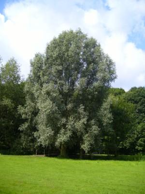 Grasweg_Weiden1