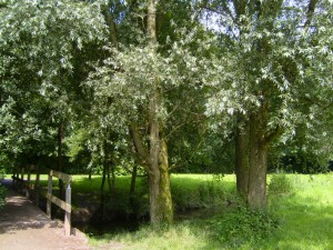 Grasweg_Weiden2