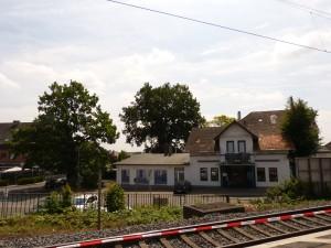 Der größte Baum südlich vom Braker Bahnhof: Blick vom Bahnsteig